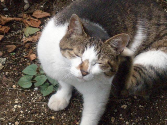 外猫4.jpg