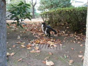 秋の公園1.jpg