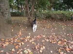 秋の公園2.jpg